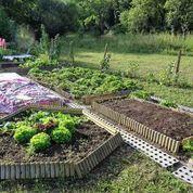 Legumes en juillet