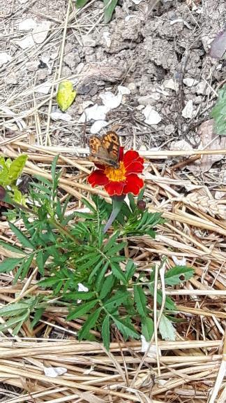 fleur avec papillon